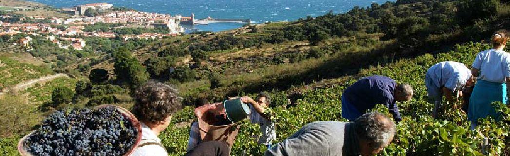 https://sud66.com/wijnbouw.jpg